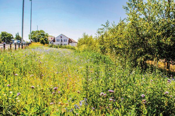 1-Meadow